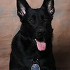 POLICE OFFICERS and K-9, DECEMBER 2011, VERMILION : 43 galleries with 407 photos